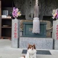 ハルウララ?佐野市三毳神社にドライブ!!
