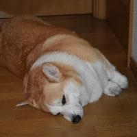 久しぶりに犬の洗濯しました