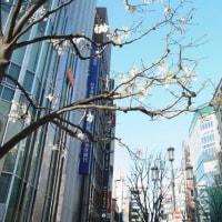 新宿の白い花