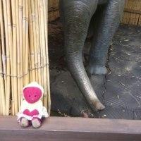 くゆっぺさんぽ~上野動物園へ、行ったよ☆~
