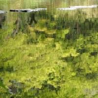 水面の新緑パレット