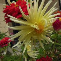 今朝のレラと花