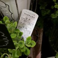 ◇ ◇ 横 浜 に !