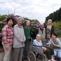 回転寿司と紫陽花