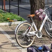 春は自転車に乗って