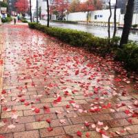 雨で歩道が赤く染まりました
