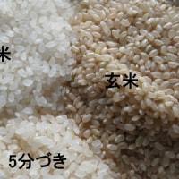 平成28年度 今年のお米のできは