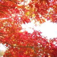 弘前の紅葉