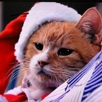 ベンケ~シに聴かせたいクリスマスソング~