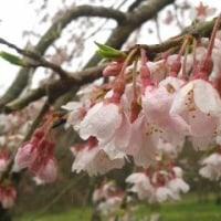 高崎自然の森花咲く径