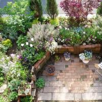 葉色輝く薔薇を待つ季節 ~定期観察5月の庭'17