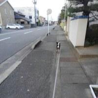 お散歩ですロード