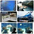 マリホ水族館/ふみこ