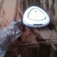 ロボットクリーナーと猫