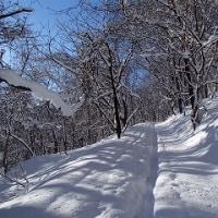 ノートラックの春香山