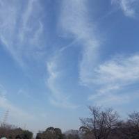 春のような暖かさに誘われ大泉緑地へ 5 (大阪府堺市)