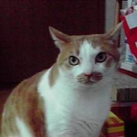 羊毛フェルト リアル猫 姫