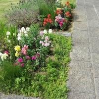 花菜ガーデンに初訪問