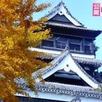 熊本城本丸の大銀杏