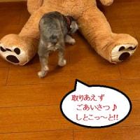 肉球が・・・(*_*)