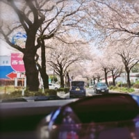 Cherry-blossom viewing part3