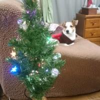クリスマスツリーがお目見え。