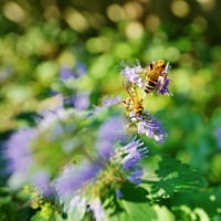 秋の花々と虫たち(赤塚植物園)