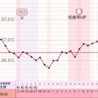 D26  高温期11日目