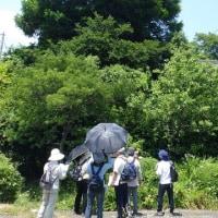 柳井市 楽しかった新庄史跡巡りウォーキング(2/3)