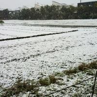 54年ぶり!!11月の積雪