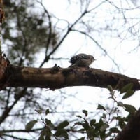 鳥撮り日記ーヤマガラ・ジョウビタキなど