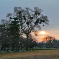 樹木が主役の写真ー40  最終回