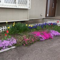 北海道も春ですね〜