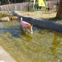 日本を楽しむ その5 ~犬と編