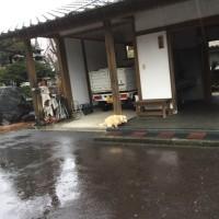 2月23日、富士山の日だけど…