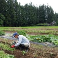 農作業の原点は草取り!?