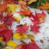 「秋色じゅうたん」