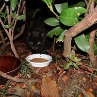 公園猫と敷地猫ちゃん 1227
