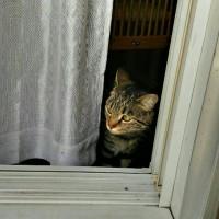 本日も晴天なり。猫いない生活6日目よ(ΦωΦ)