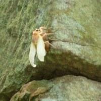 季節外れの蝉を見た!