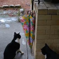 興味深い傘と猫