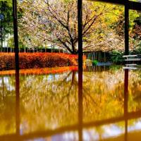10月桜を見