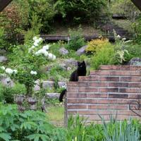 猫と花と温泉と・・・ごはん