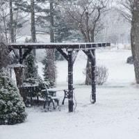 雪が降っております(笑)