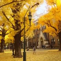 東京大学は黄金色
