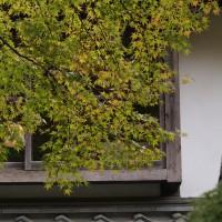 由布院温泉亀の井別荘の紅葉はまだ先です