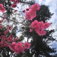 北野天満宮 梅花祭へ