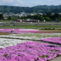 魚沼 芝桜まつり・・3