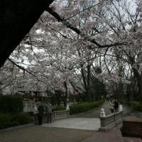 ¢ ピュアな白い体の色がなんとも清純な上品さがある、エナガ ¢ G公園(岐阜県岐阜市)