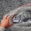 強風の中の釣りは苦手です。